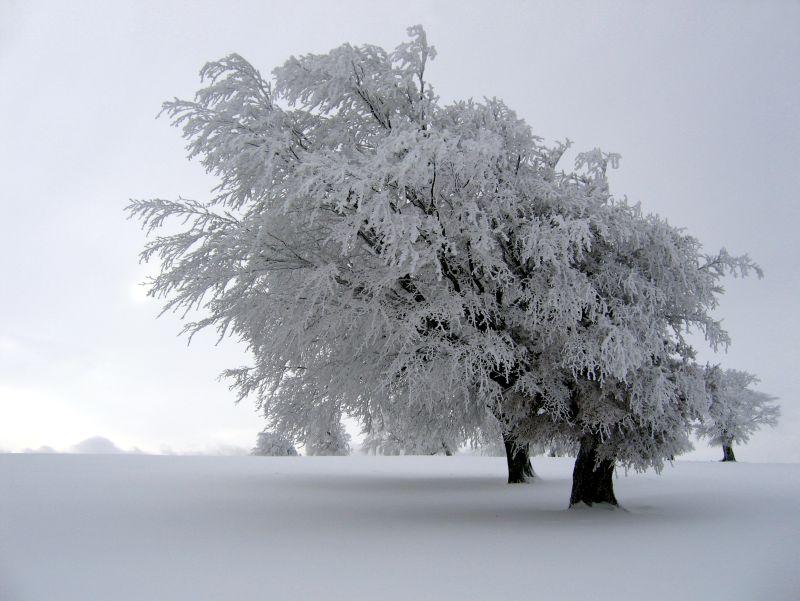 consejos depresión invernal