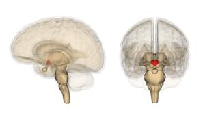 encefalopatia