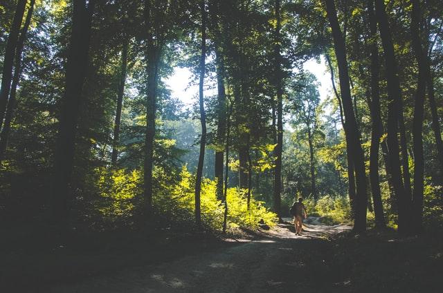 bosque reducir estres