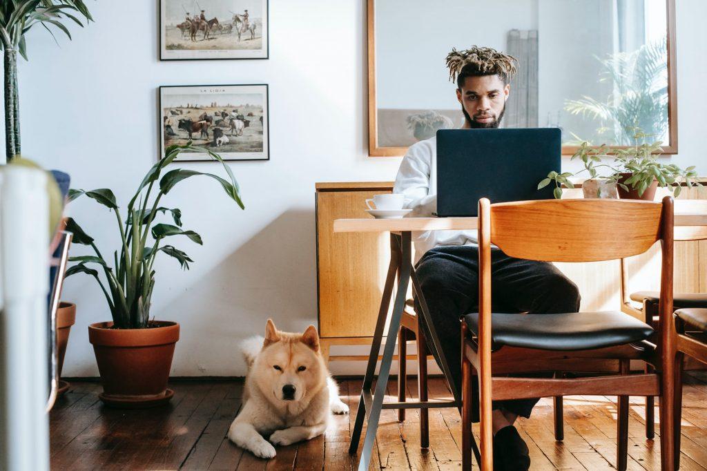 trabajar con mascotas
